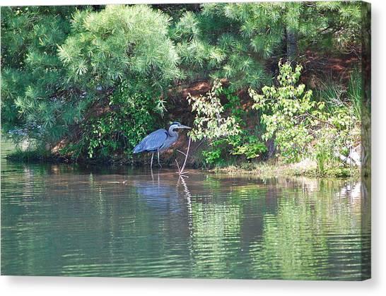 Heron Under Pines Canvas Print
