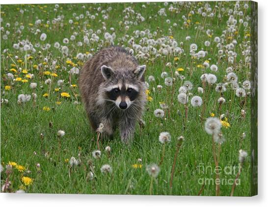 Hey What You Got There Canvas Print