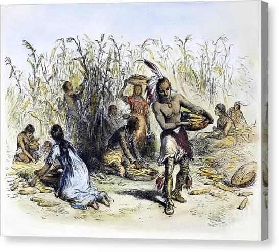 Indian Corn Canvas Print - Hiawatha: Corn Harvesting by Granger