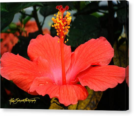 Hibiscus Bowl Canvas Print by Ruth Bodycott