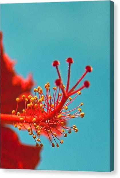 Hibiscus Canvas Print by Jocelyn Kahawai