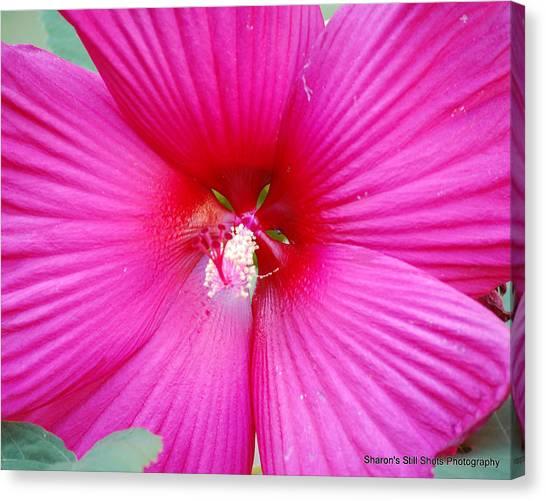 Hibiscus Canvas Print by Sharon Mason