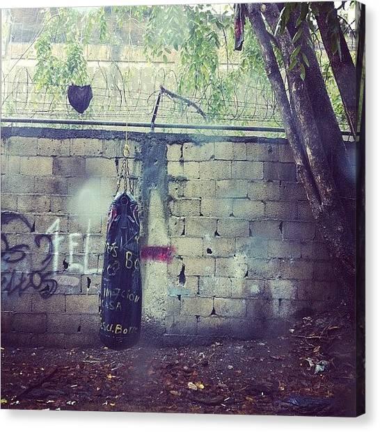 Fighting Canvas Print - Hidden Beauty #photooftheday #instagram by Ariana Hernandez