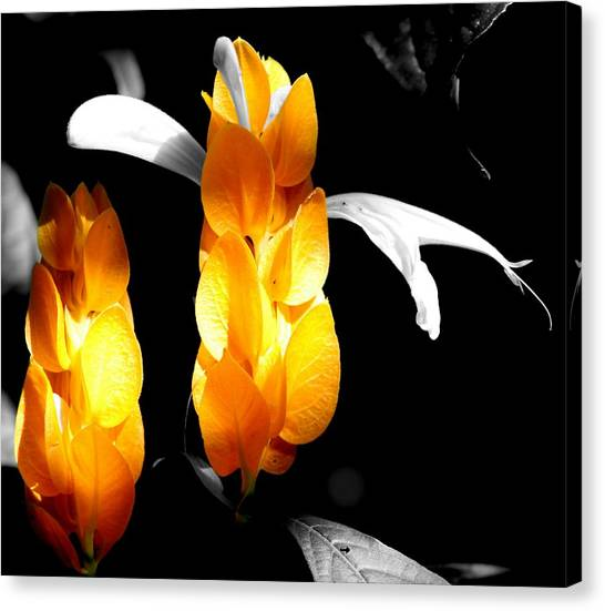 Hidden Secrets Canvas Print