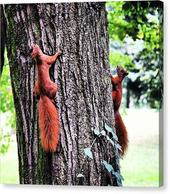 Squirrels Canvas Print - Hide And Seek #thebestshooter by Chris Barber