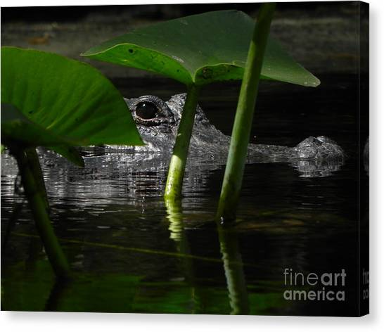Hide And Seek You Canvas Print by Jack Norton