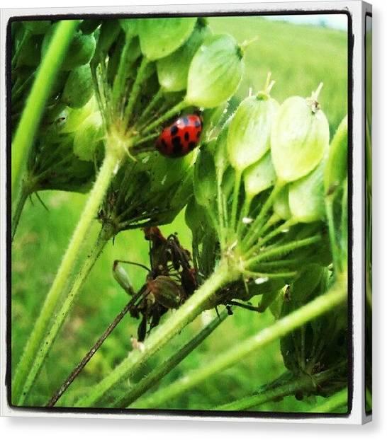 Beetles Canvas Print - Hiding by Vicki Field