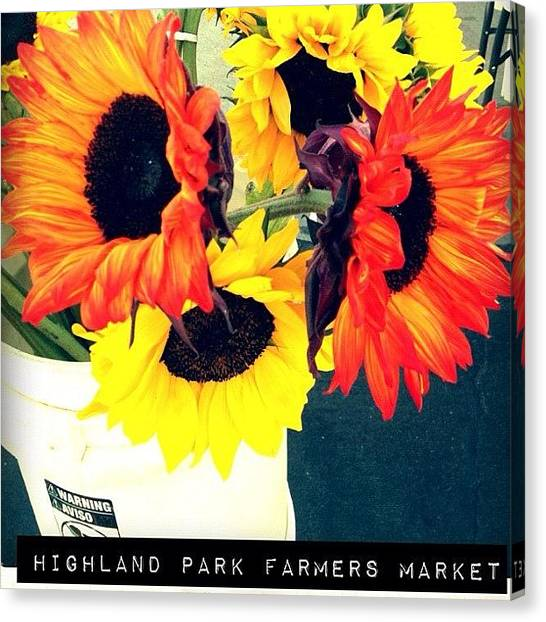 Ashes Canvas Print - #highlandpark #sunflowers #la #gogobot by Ash Eliot