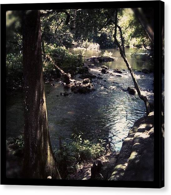 Swamps Canvas Print - Hiking Down By The River! by Dustin Goolsby