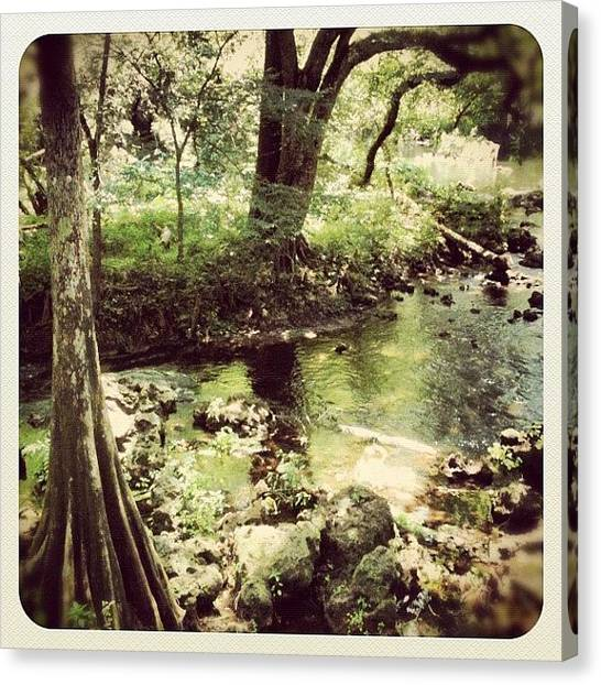 Swamps Canvas Print - Hiking by Dustin Goolsby