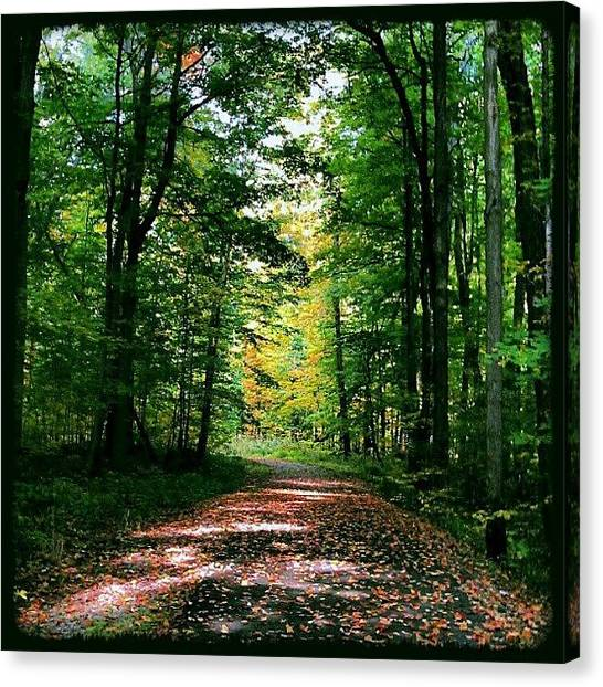 Forest Paths Canvas Print - Hiking The #indiantrails In #ashtabula by Brandon White