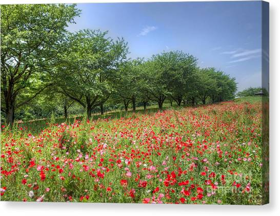 Hill Where A Poppy Bloom Canvas Print by Tad Kanazaki
