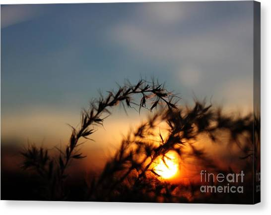 Hold On To The Sun Canvas Print by Erica Hanel