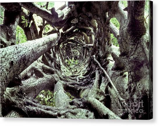 Monteverde Canvas Print - Hollow Trunk Of Strangler Fig by Greg Dimijian