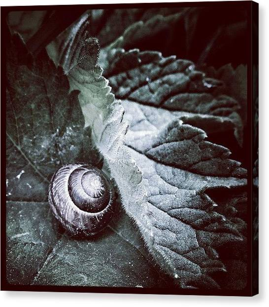 Spiral Canvas Print - Home Sweet Home!  #snail #snail_porn by Robert Campbell