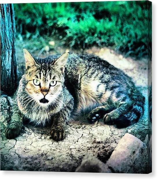 Persians Canvas Print - Homeless Cat In Tehran.#iphone4only by Mehdi Shahmardi