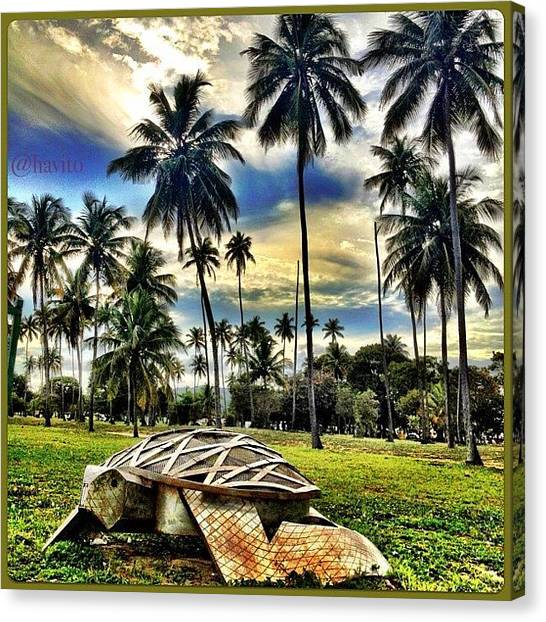 Tortoises Canvas Print - Homenaje A La Conservación Del Carey by Havito Nopal