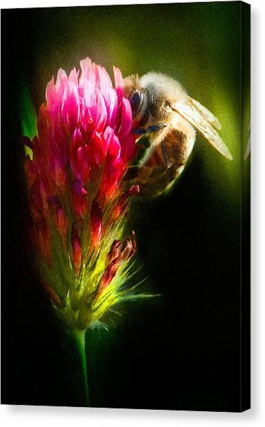 Honey Bee Canvas Print