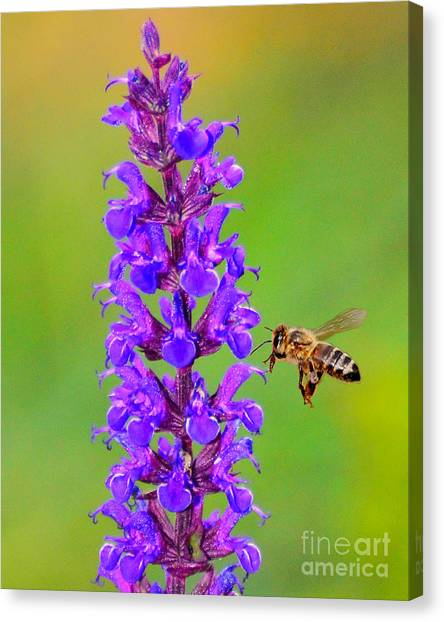 Honeybee N Blooms Canvas Print
