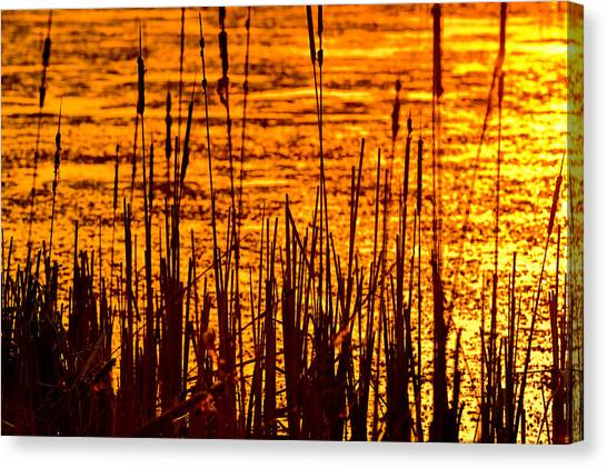 Marsh Grass Canvas Print - Horicon Cattail Marsh Wisconsin by Steve Gadomski