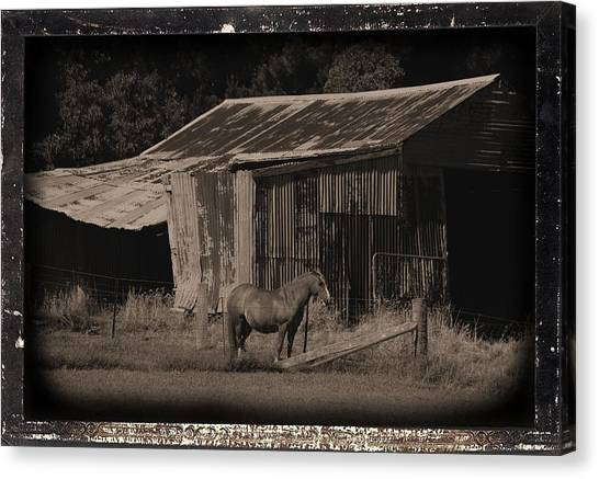 Horse And Old Barn Canvas Print