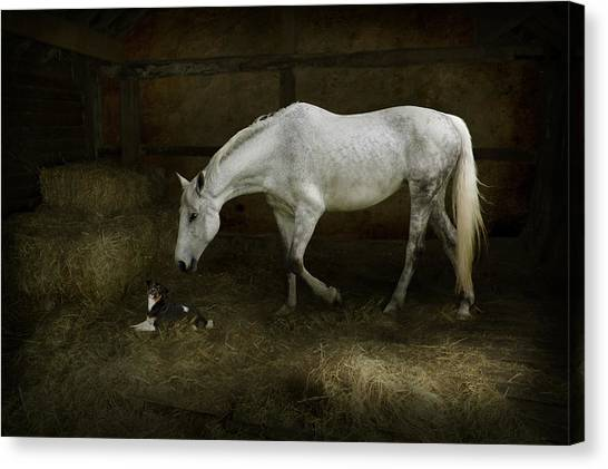 Horse And Puppy In Stable Canvas Print
