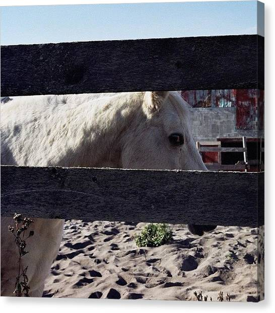 Ponies Canvas Print - Horse #animals #filmphotography #35mm by Eileen Garcia Photography