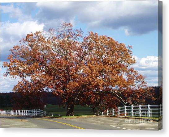 University Of Connecticut Canvas Print - Horse Barn Hill In Autumn by Michelle Welles