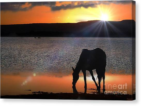 Horse Drinking Water  Canvas Print