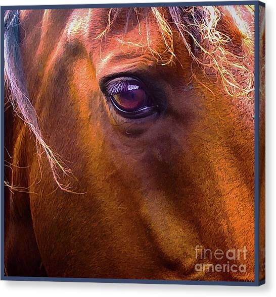 Horse Eyes Canvas Print