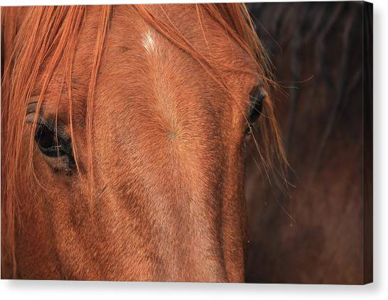 Horse Hide Canvas Print