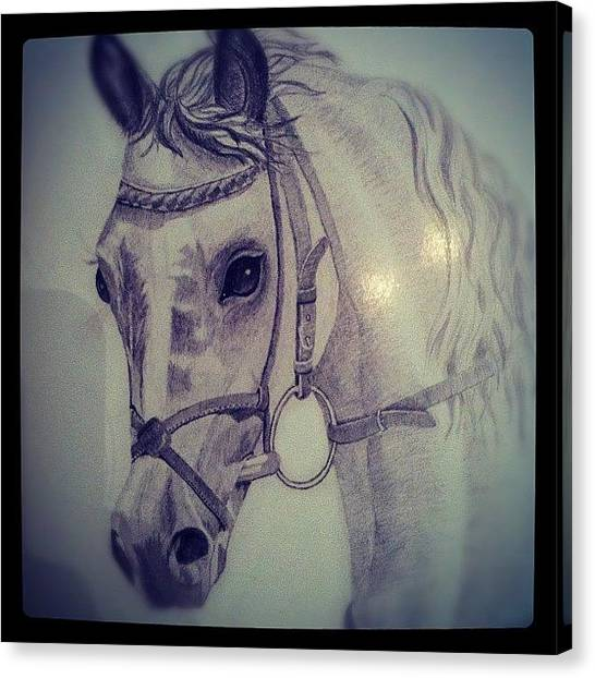 Israeli Canvas Print - Horse #horse #ig #israel #ig_israel by May Pinky  ✨