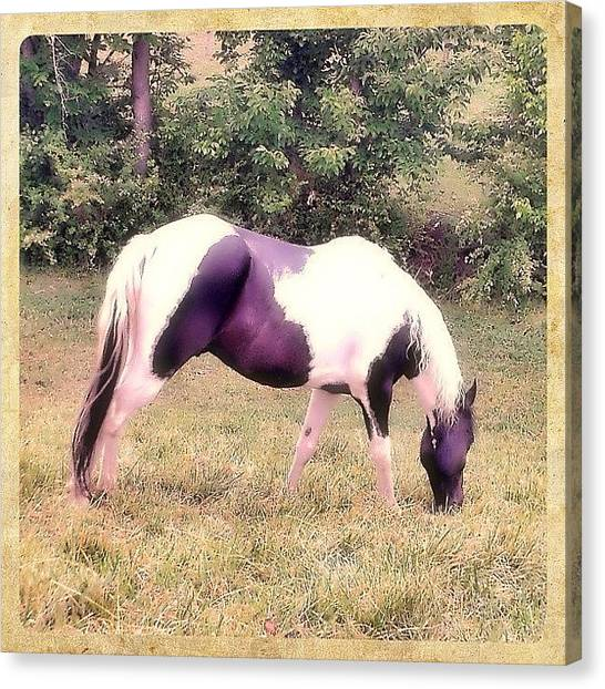 Horse Farms Canvas Print - #horse #outdoors #farm #insta_artist by Karyn Teno