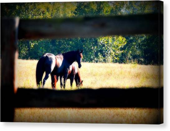 Brown Ranch Trail Canvas Print - Horse Photography by Peggy Franz