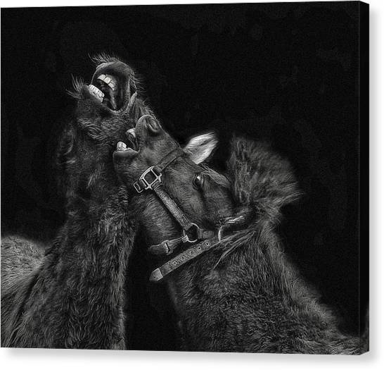 Horse Play Canvas Print by Pat Abbott