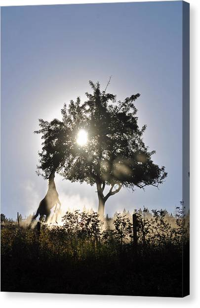 Horse Reaching For Apples Canvas Print