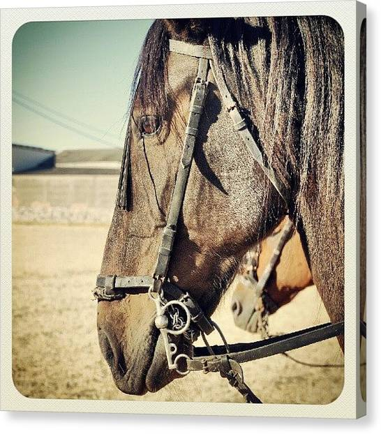 Thoroughbreds Canvas Print - #horse #spain #thoroughbred by Christian Gomez