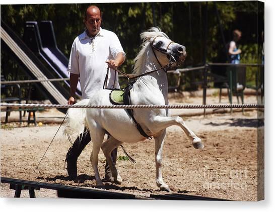 Horse Training Canvas Print