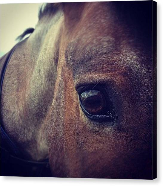Ponies Canvas Print - #horseeyeviewcontest by Caitlin Hay
