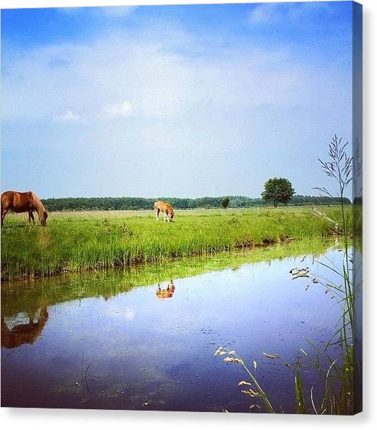Ponies Canvas Print - Horse'n Around In Holland Again by Jonathan P