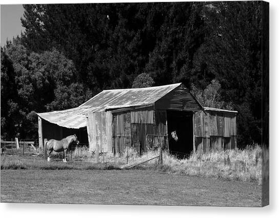 Horses And Old Barn Canvas Print