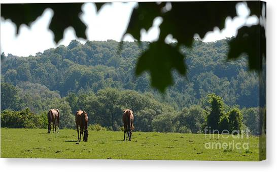 Horses And Summer Breeze Canvas Print
