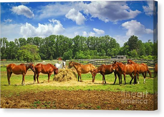 Farm Animals Canvas Print - Horses At The Ranch by Elena Elisseeva