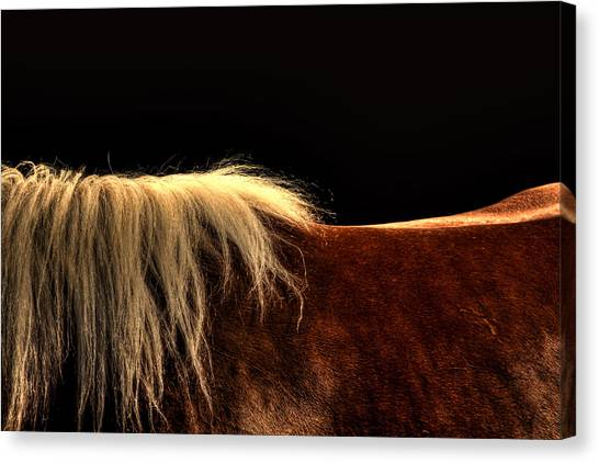 Horses Back Canvas Print by Gary Smith