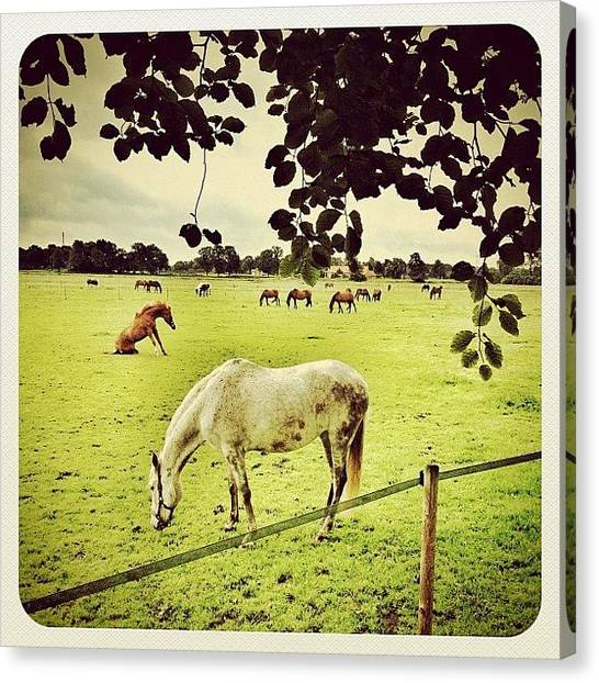 Horse Farms Canvas Print - Horses In The Fields by Wilbert Claessens