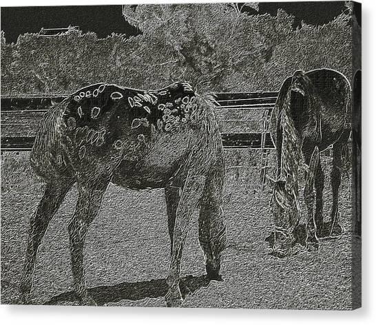 Horses Sketch Canvas Print