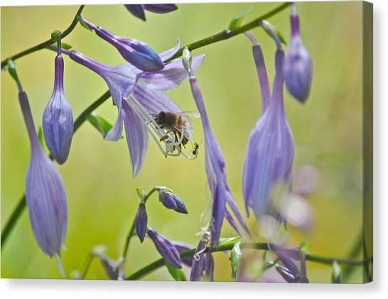 Hosta Blossom-bee-ant Canvas Print