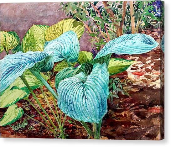 Hosta Canvas Print by Peter Sit
