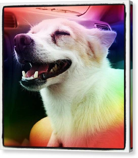 Rainbows Canvas Print - Hot Dog ! #dog #tounge #pet #cute by Mandy Shupp