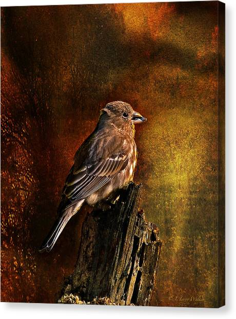 House Finch With Sunflower Seed Canvas Print